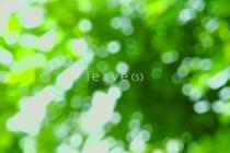 quatro_7_leaves_210